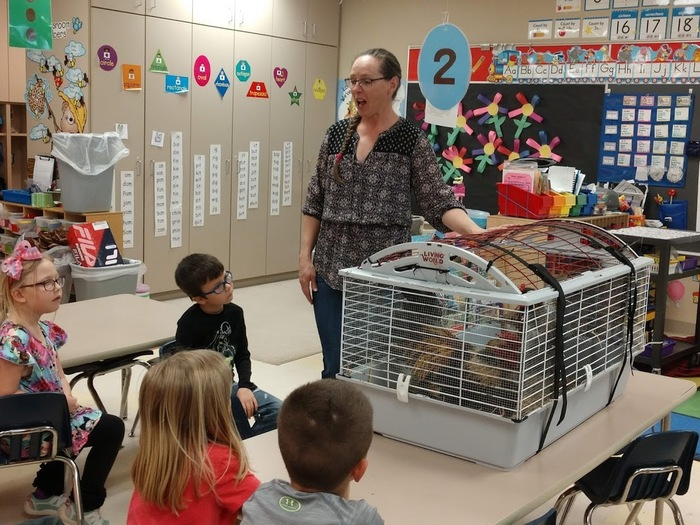 Kindergarten classes were visited by farmer Donna Spaeth today.  She brought a hen and a rooster that were hatched at Ogema Elementary last year.  Students learned a few differences between hens and roosters, and took turns petting a hen.  Thank you Donna Spaeth!